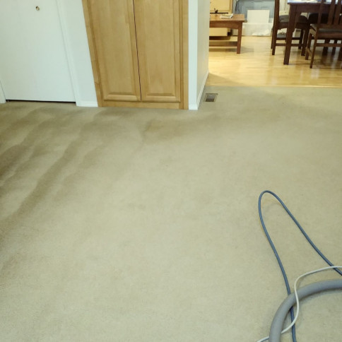 carpet solutions portland or